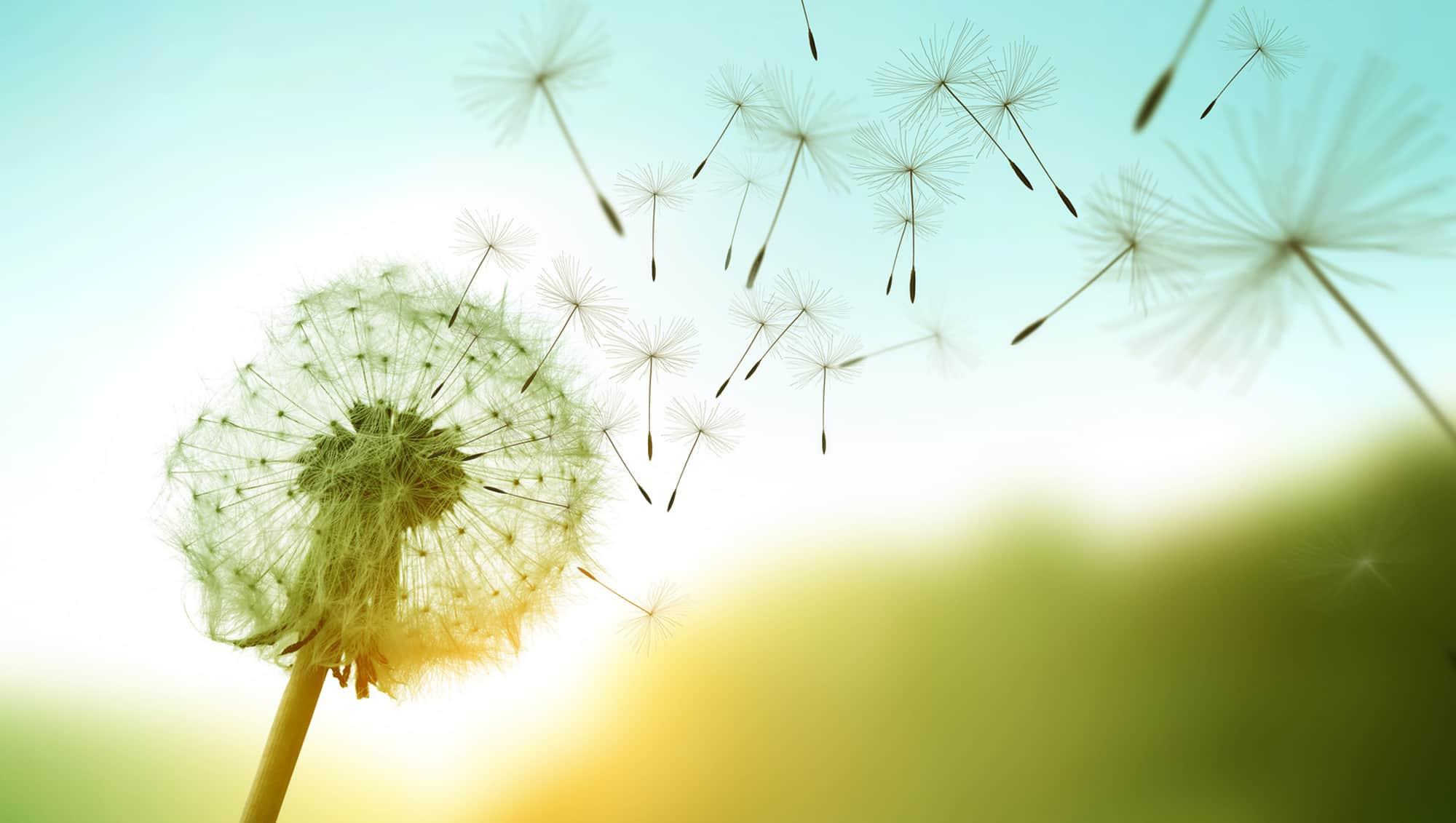 Transformacion con proposito a traves del esfuerzo y la superacion
